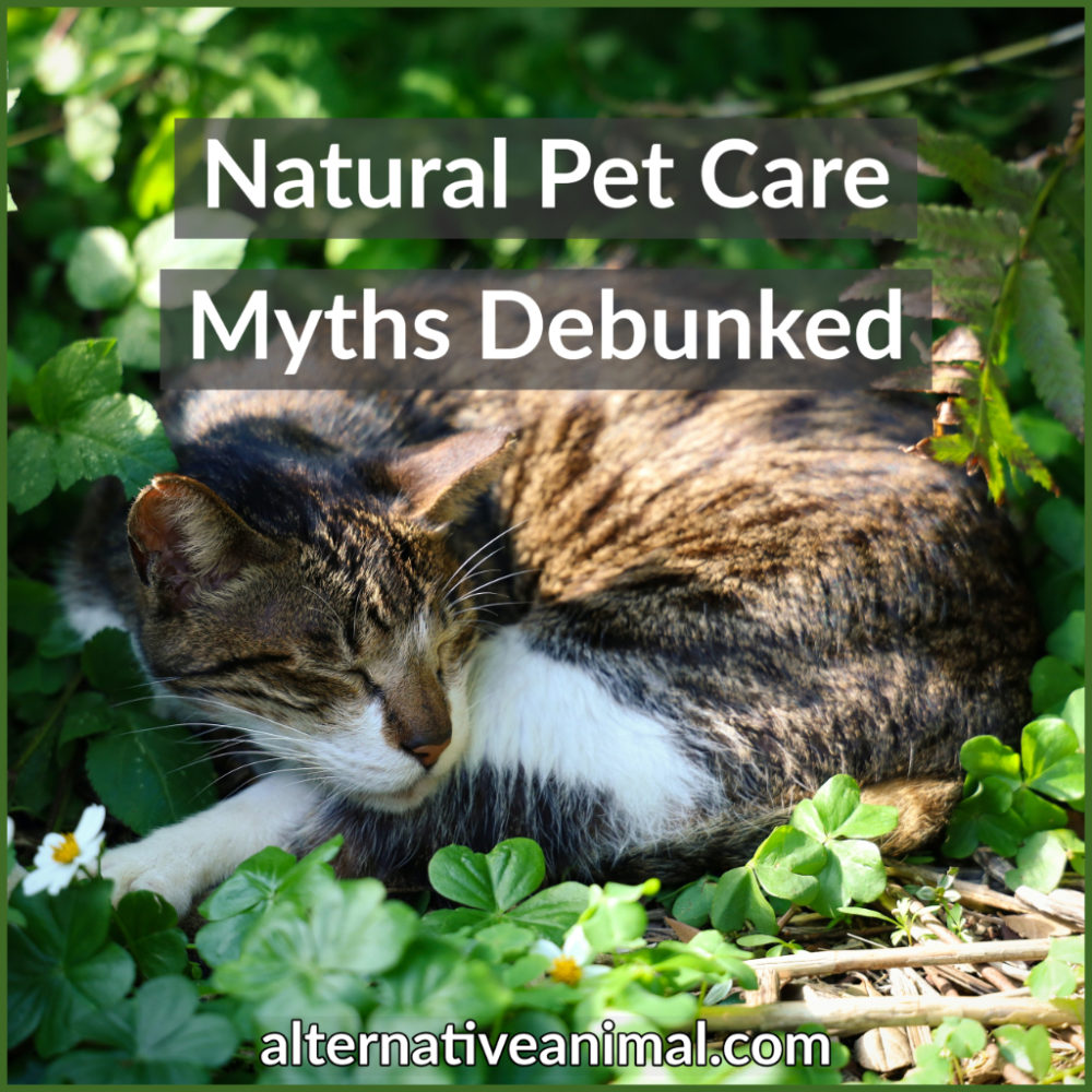 Natural Supplements for Horses, Dogs and Cats