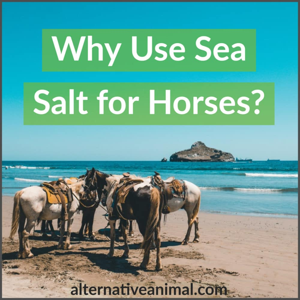Why use sea salt for horses