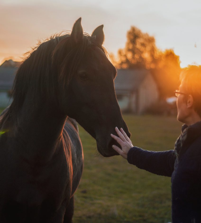 treat thrush in horses