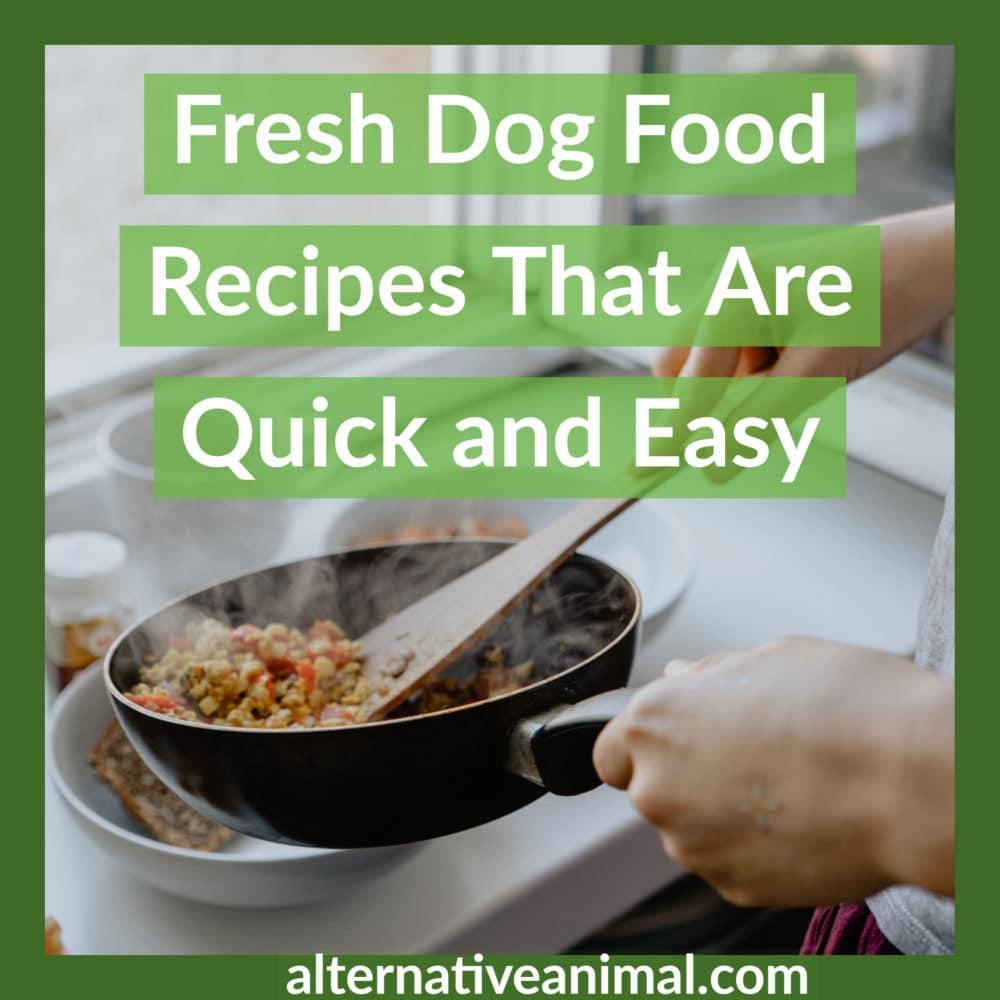 Fresh Dog Food Recipes