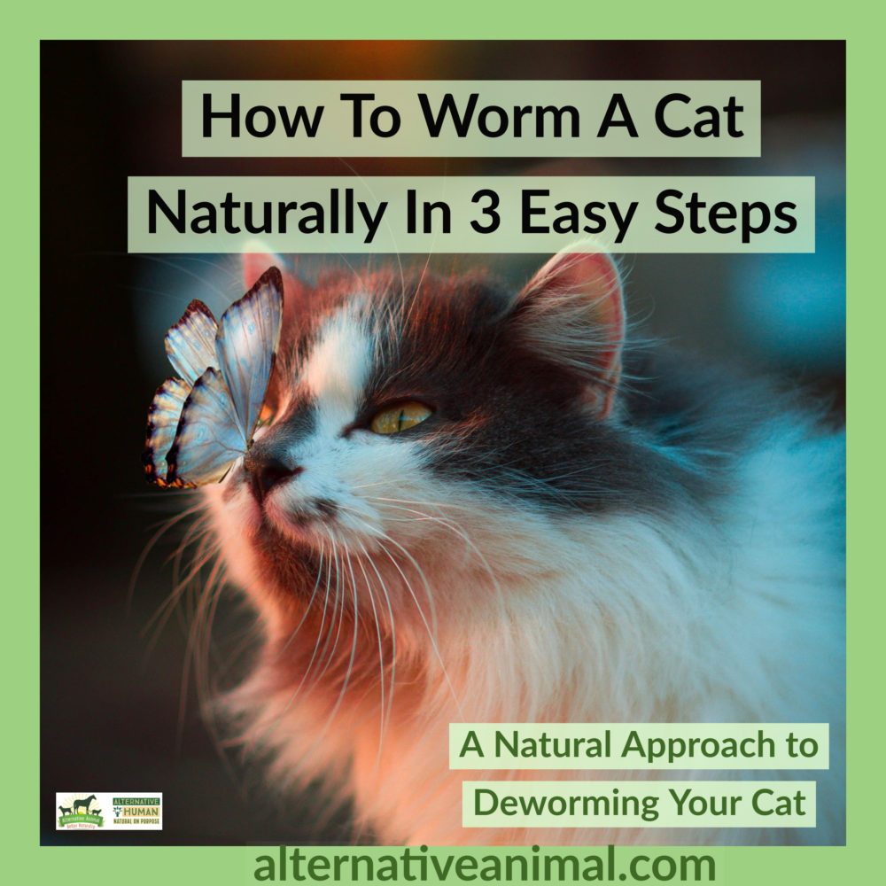HOw to worm a cat naturally