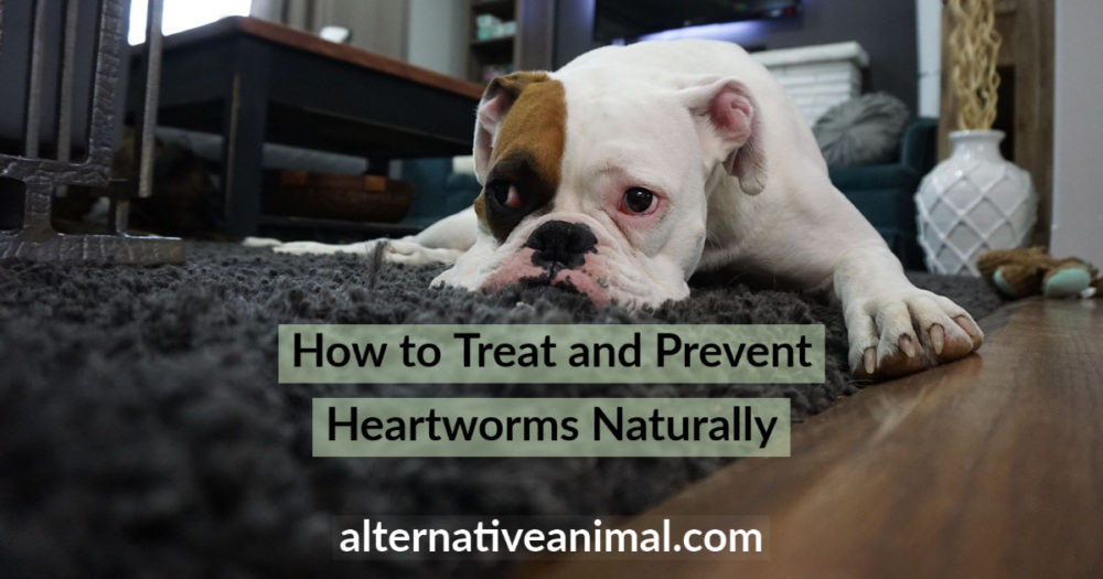Natural Treatment for Heartworms in Dogs