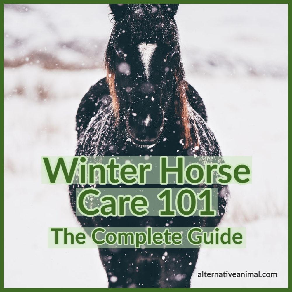 winter horse care 101