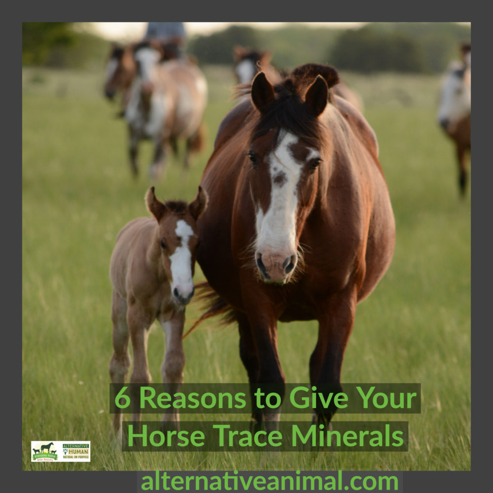 horse trace minerals