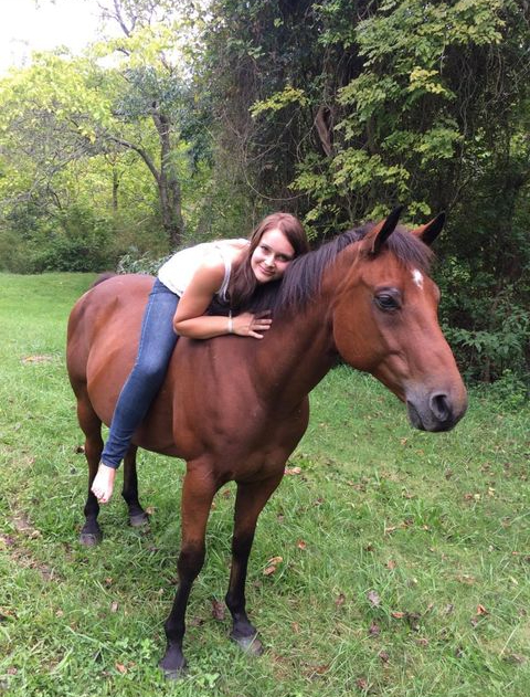 Senior Horse Supplement