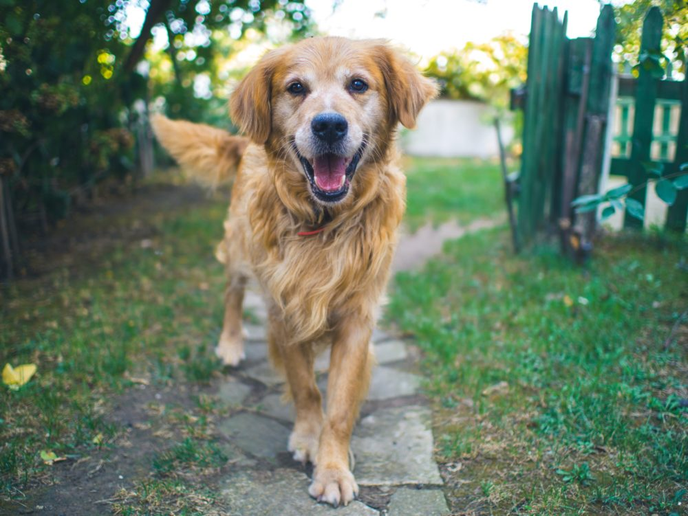 what causes arthritis in dogs